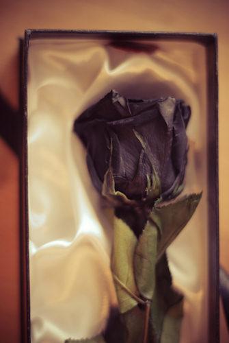 Be my Valentine…