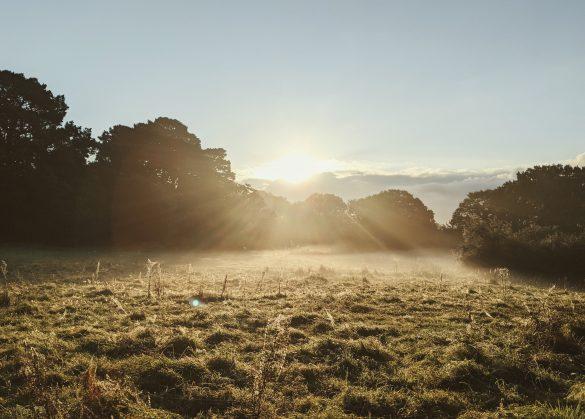 Sun rising above a misty field